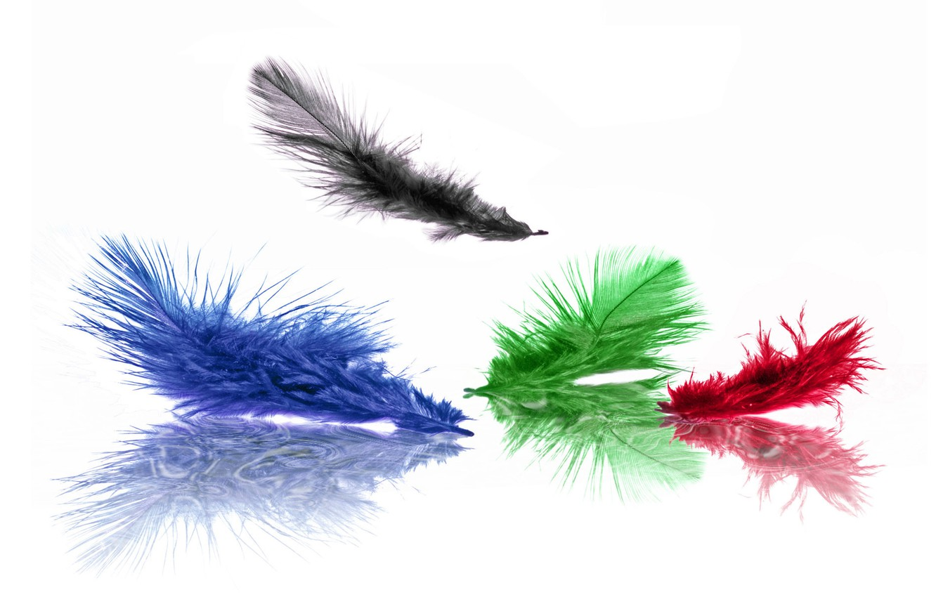 Photo wallpaper blue, red, green, black, color, feathers