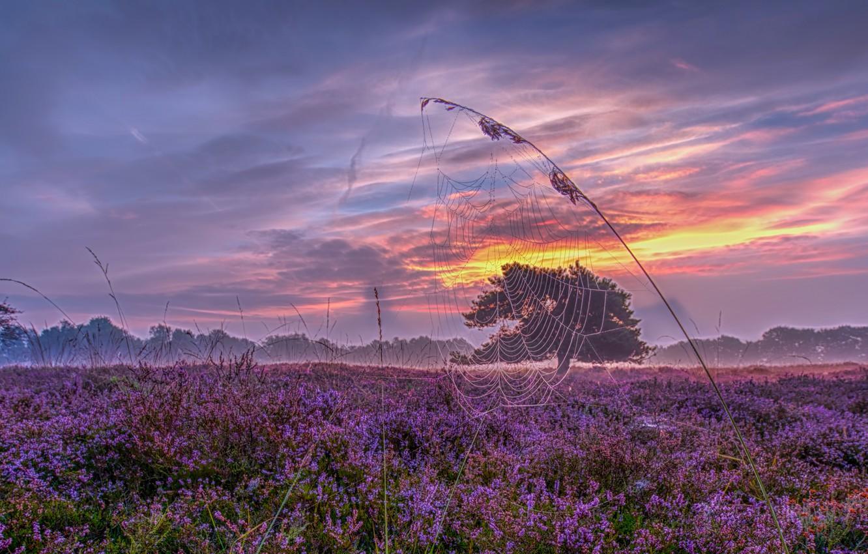 Wallpaper Sunset Web Meadow Panorama Netherlands A