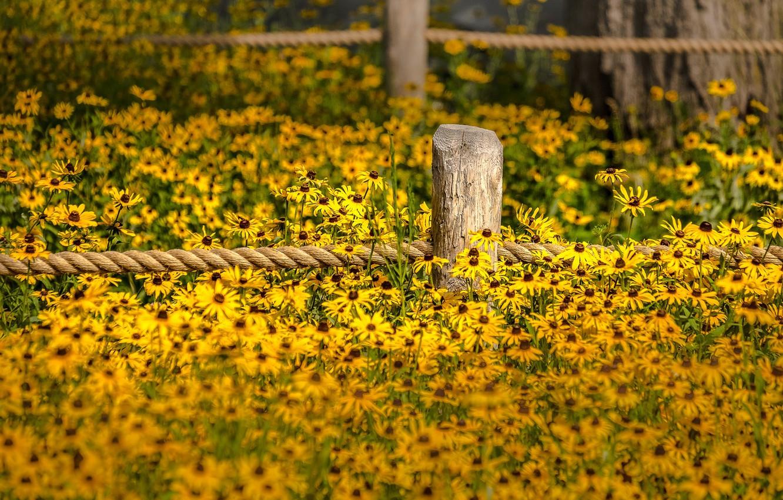 Photo wallpaper flowers, fence, garden