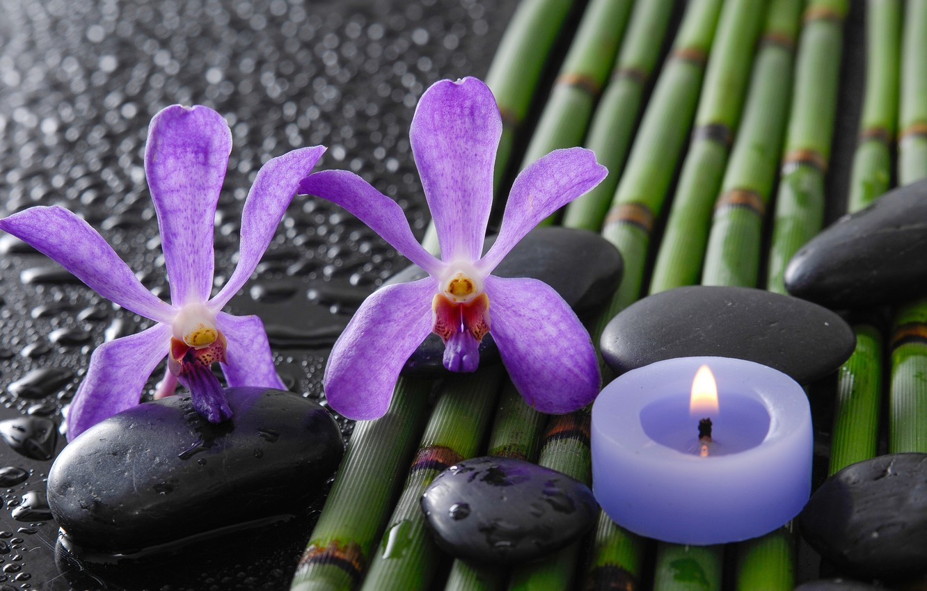 Photo wallpaper drops, flowers, bamboo, orchids, Spa stones