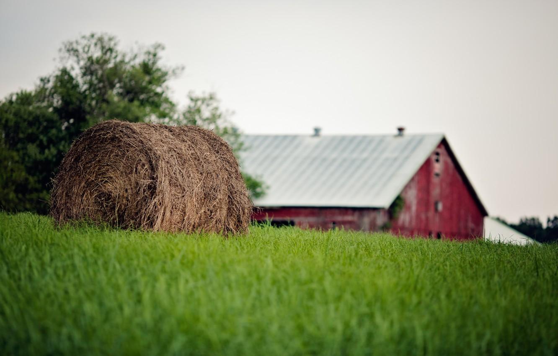 Photo wallpaper summer, grass, bale, straw, farm