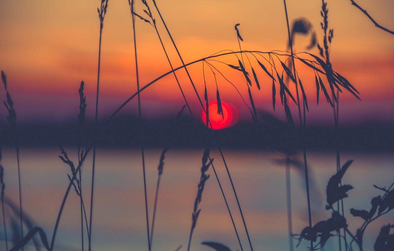 Photo wallpaper grass, the sun, macro, sunset, nature, a blade of grass, spike