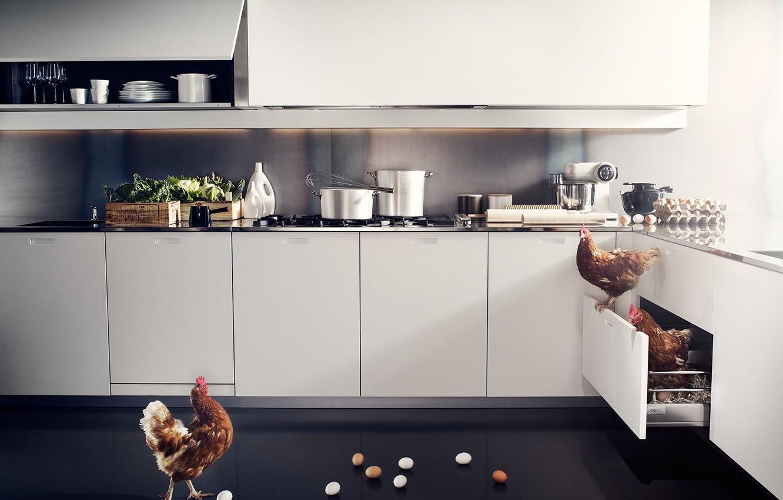 Photo wallpaper eggs, Kitchen, box, chicken