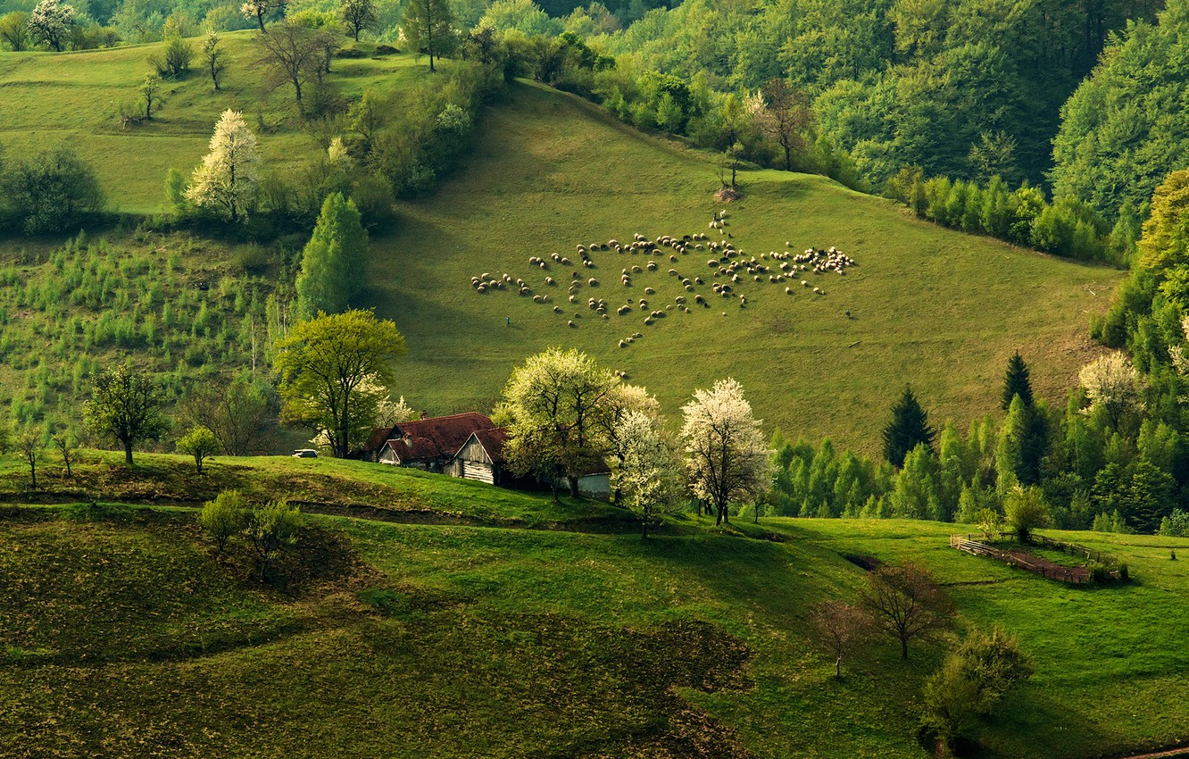 Photo wallpaper forest, nature, hills, sheep, home, spring, morning, flock