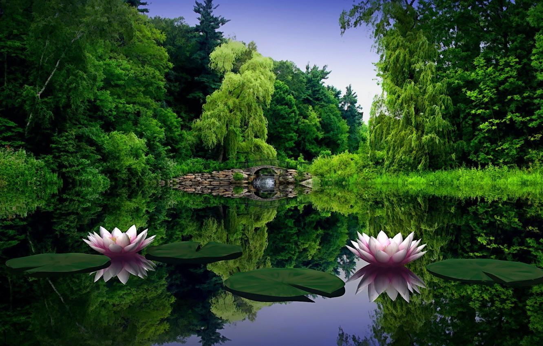 Photo wallpaper water, bridge, Pond, water lilies, willow