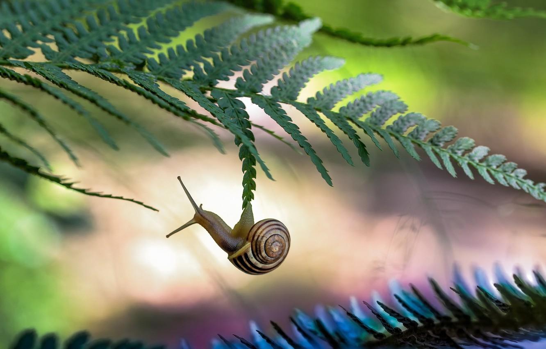 Photo wallpaper macro, foliage, snail