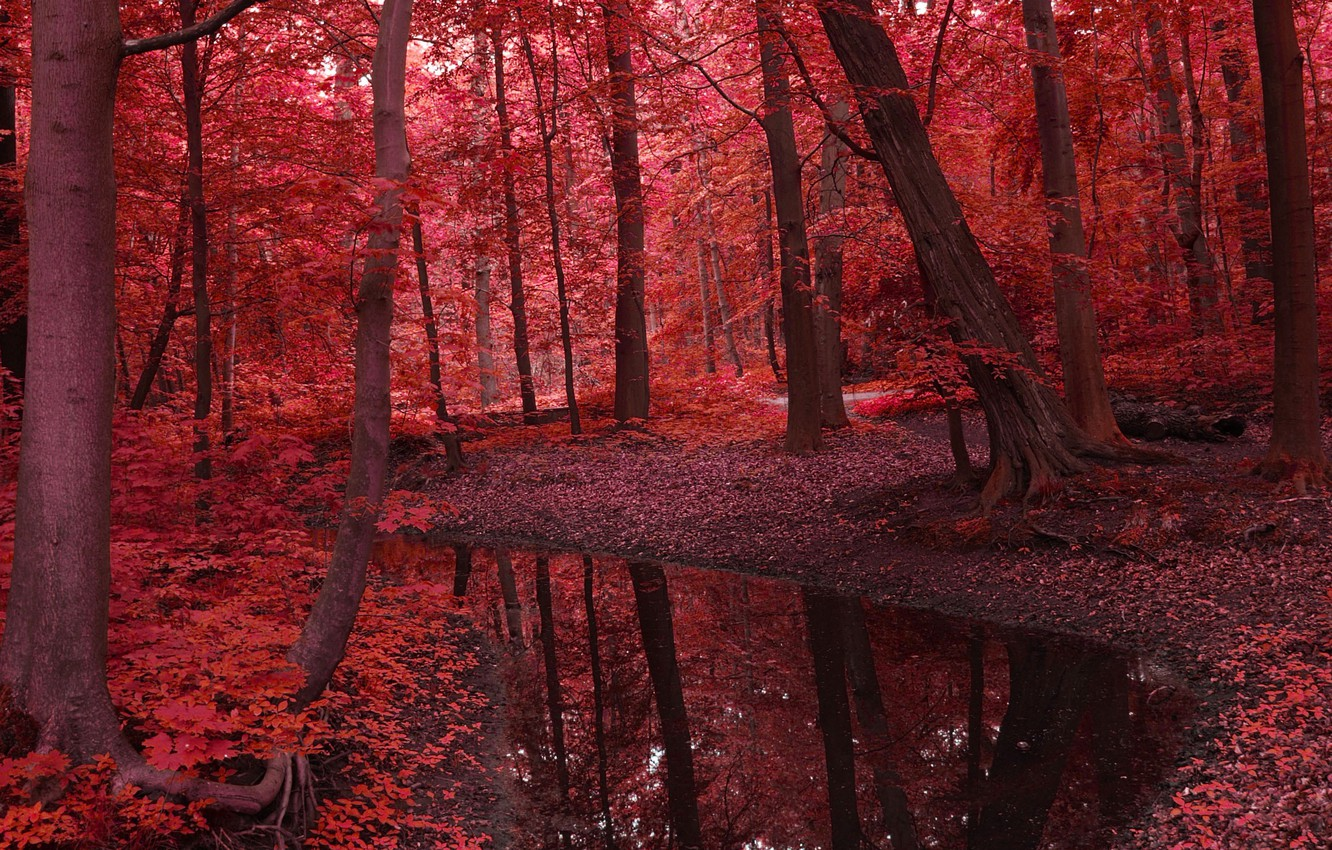 Photo wallpaper autumn, forest, leaves, water, trees, landscape, nature, river, red, beauty