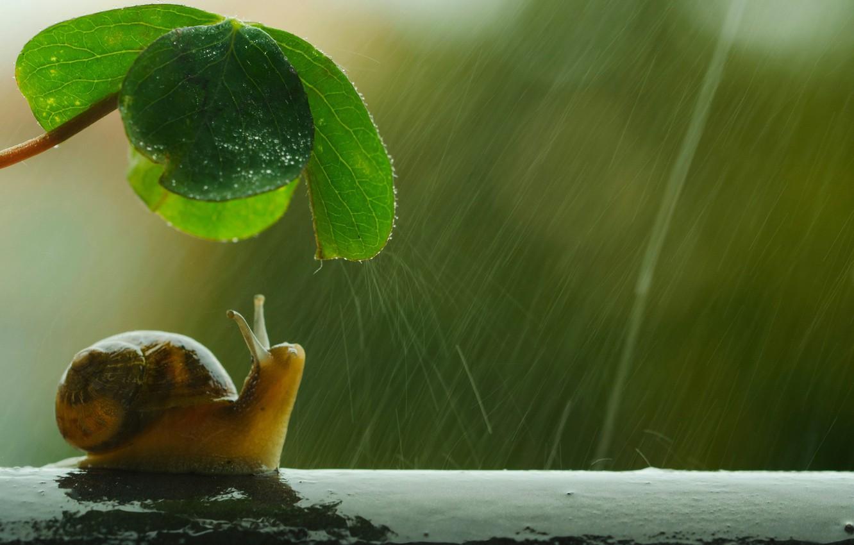Photo wallpaper umbrella, shell, snail, raining