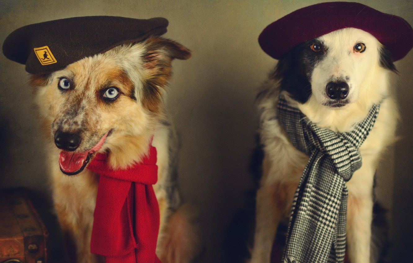 Photo wallpaper dogs, style, retro, treatment, scarf, pair, image, takes, accessories, Wallpaper from lolita777, boys, Portet
