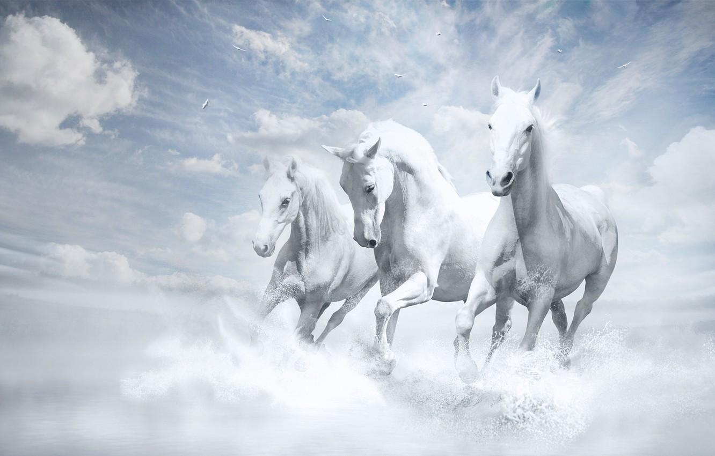 Wallpaper Wallpaper White Horse White Horses Images For Desktop Section Zhivotnye Download