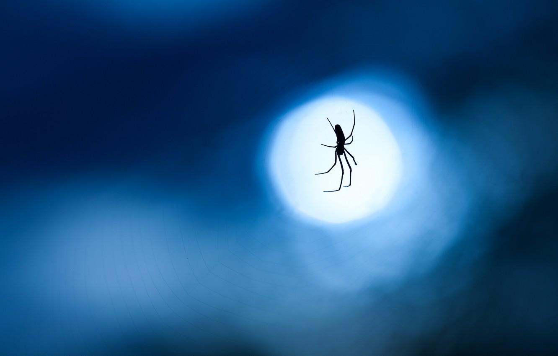 Photo wallpaper macro, night, blue, background, the moon, web, Spider