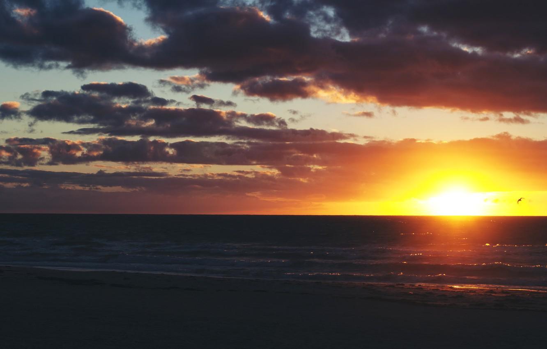 Photo wallpaper wave, the sky, clouds, sunset, bird, horizon