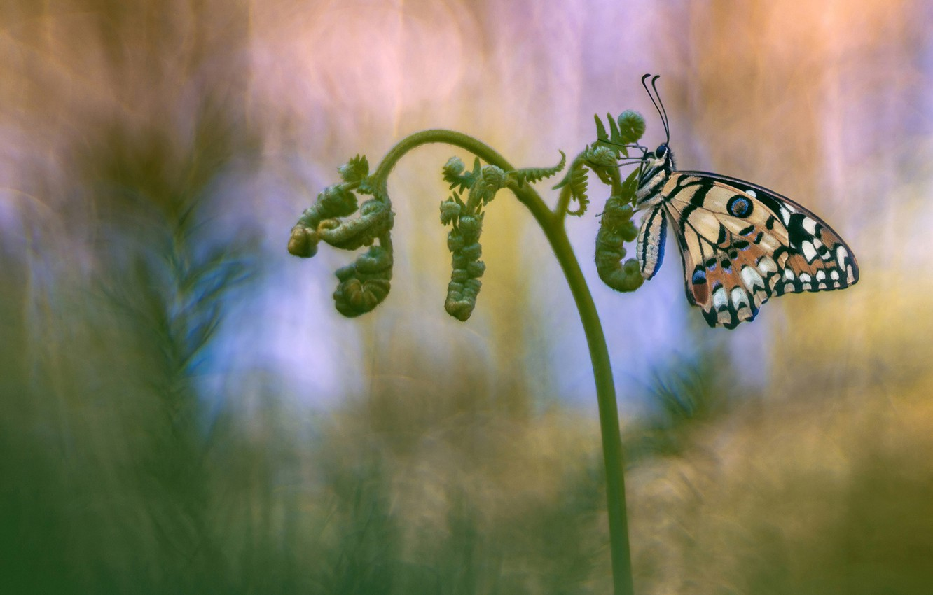 Photo wallpaper background, butterfly, insect, fern, Wallpaper from lolita777