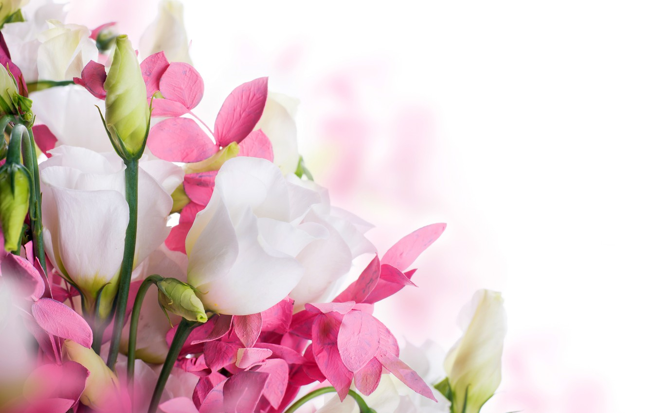 Photo wallpaper spring, white, buds, flowering, pink, blossom, flowers, beautiful, eustoma