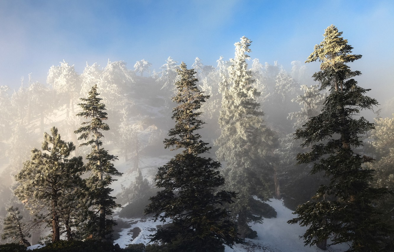 Photo wallpaper winter, the sky, snow, trees, spruce, slope