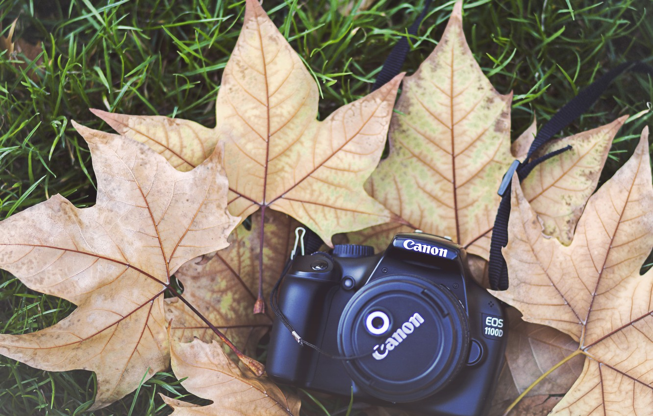 Photo wallpaper leaves, camera, the camera, cover, maple, canon
