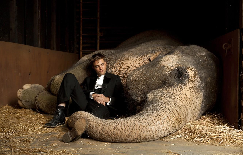 Photo wallpaper actor, vampire, Twilight, Male, Robert Pattinson, Water for elephants, the elephant, Edward Cullen