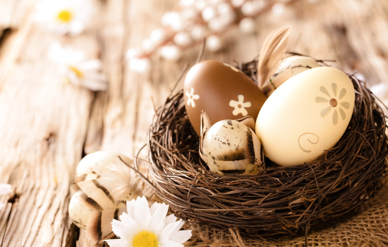 Photo wallpaper chamomile, eggs, Easter, wood, flowers, eggs, easter, camomile