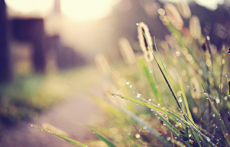 Photo wallpaper grass, macro, light, street