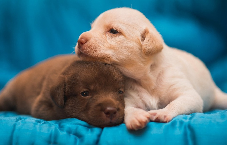 Photo wallpaper puppies, pair, kids