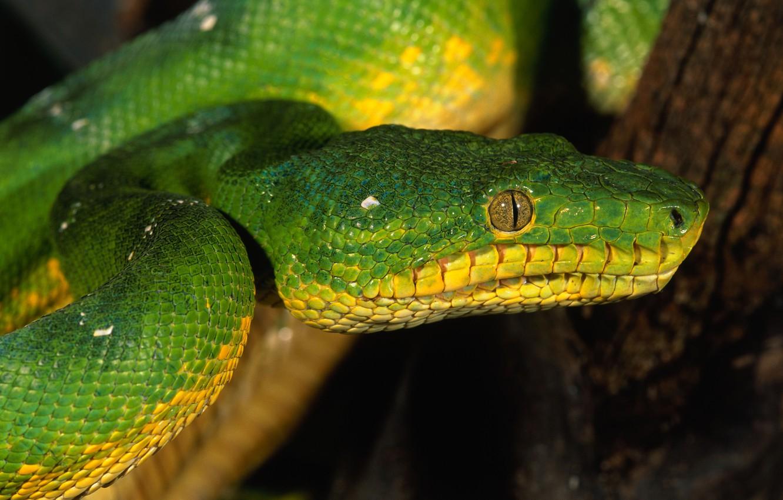 Photo wallpaper eyes, snake, scales, green
