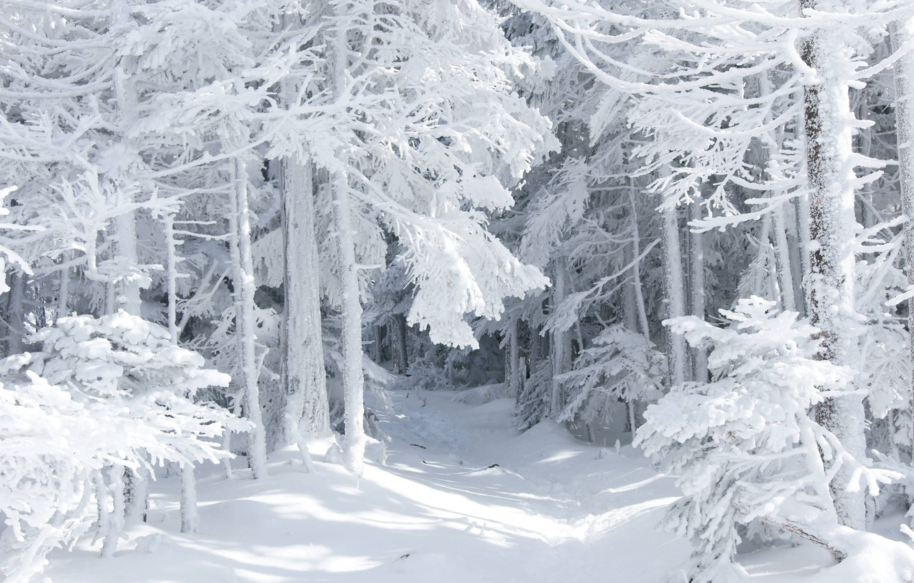 Photo wallpaper winter, forest, snow, nature, tale