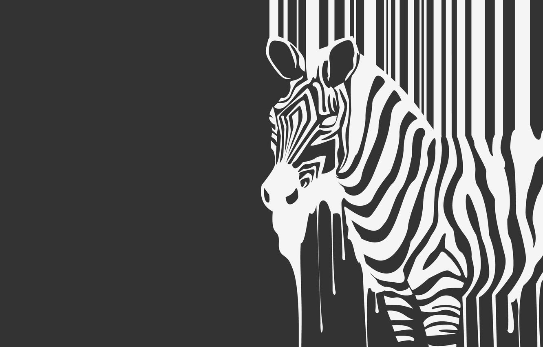 Photo wallpaper strips, b/W, Zebra, beast, flows, animal, zebra