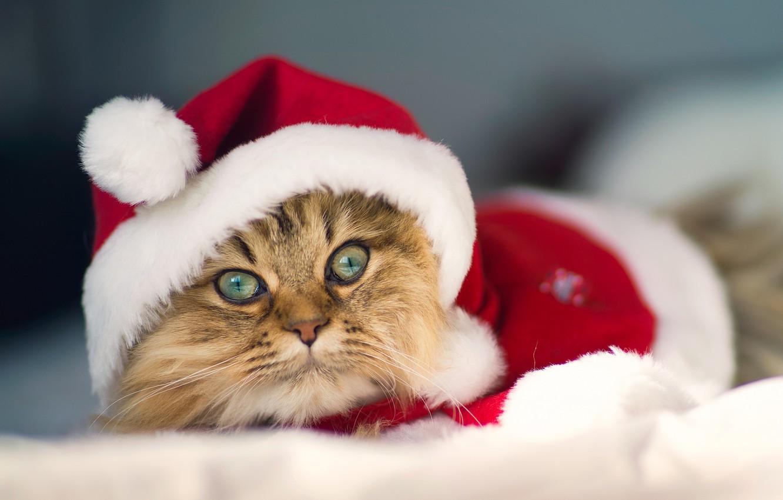 Photo wallpaper costume, Daisy, © Benjamin Torode, Christmas Cat
