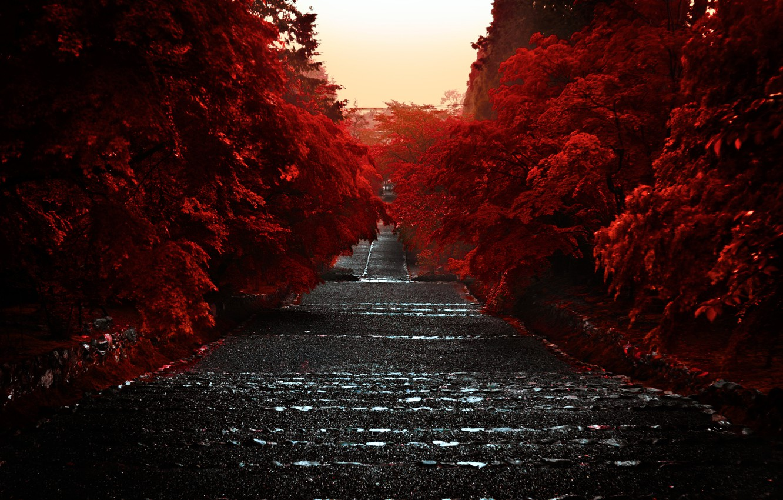Photo wallpaper Japan, Japan, Kyoto, Kyoto, The Kansai Region, Kyoto Prefecture, The Island Of Honshu, 近畿地方, The …