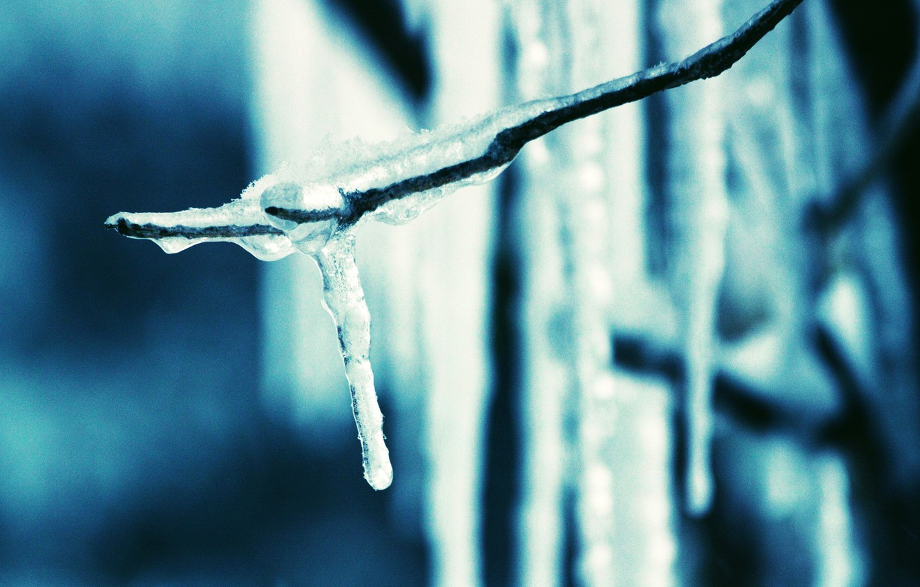 Photo wallpaper blue, branch, Ice, icicle
