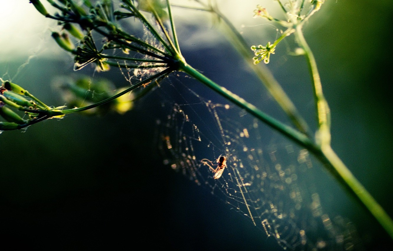 Photo wallpaper plant, web, Spider