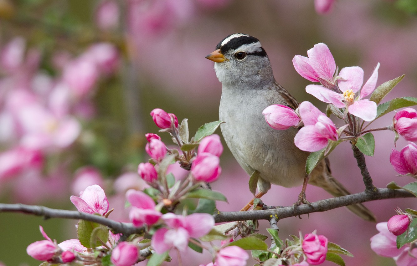 Photo wallpaper flowers, bird, branch, white-headed Sparrow oatmeal