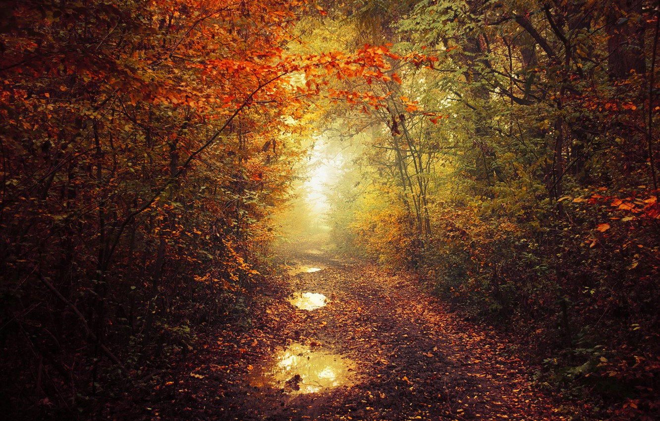 Photo wallpaper autumn, leaves, fog, pathway, autumn colors, path, mist, fall, foliage, fall colors, trail way, ponds