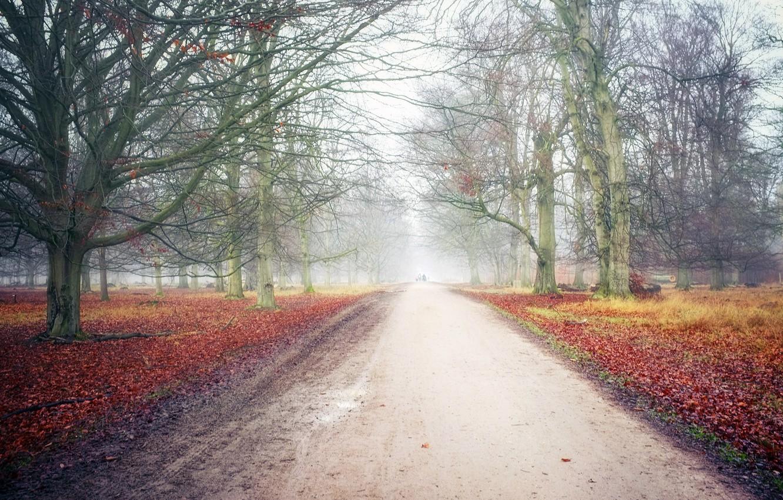 Photo wallpaper road, autumn, Park