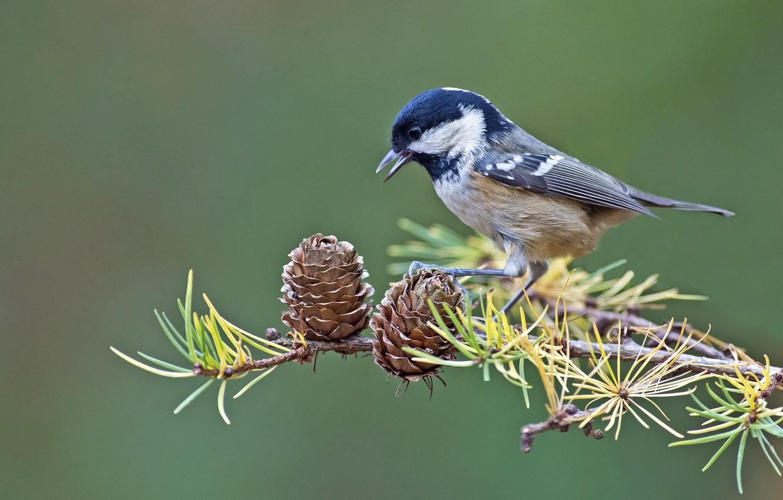 Photo wallpaper bird, branch, bumps, tit