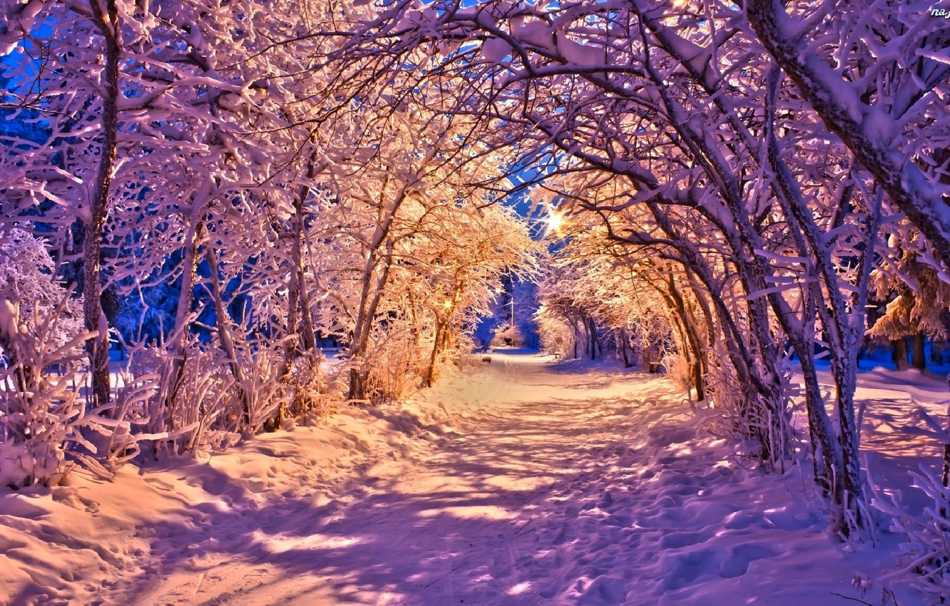 Photo wallpaper winter, road, forest, snow, trees, landscape, nature, lights, lights, Park, lights, white, forest, road, trees, …