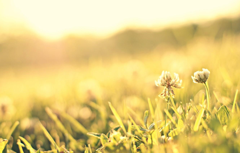Photo wallpaper greens, flower, grass, the sun, macro, flowers, background, pink, widescreen, Wallpaper, petals, meadow, wallpaper, flower, ...