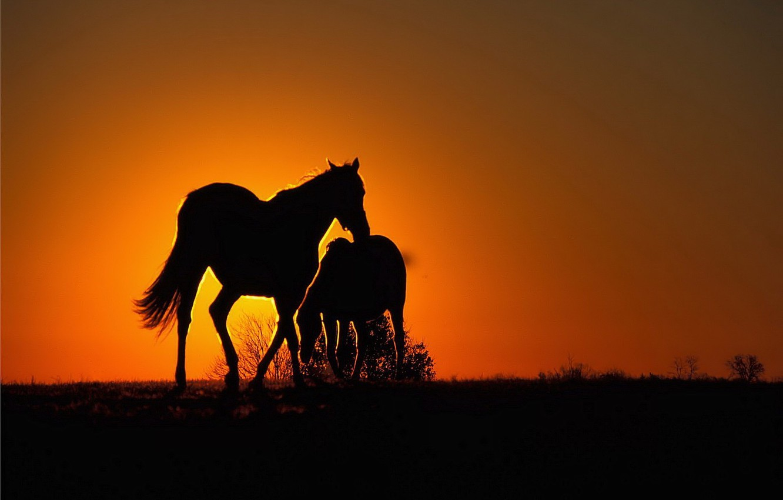 Photo wallpaper sunset, orange, Horse