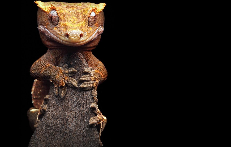 Photo wallpaper branch, lizard, listovoi Madagascar Gecko