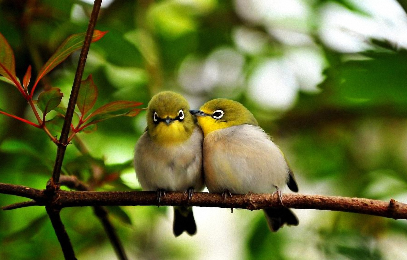 Photo wallpaper leaves, bird, color, branch, the conversation