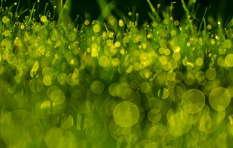 Photo wallpaper grass, macro, Rosa, green, bokeh