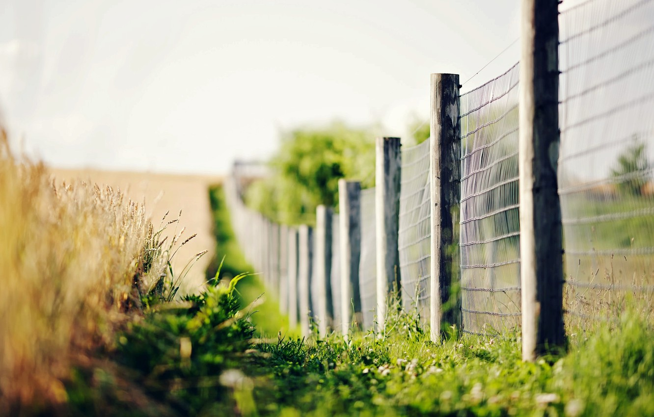 Photo wallpaper greens, grass, macro, flowers, background, widescreen, Wallpaper, the fence, blur, fence, spikelets, the fence, wallpaper, …