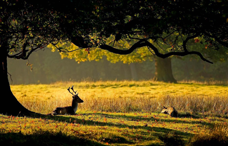Photo wallpaper grass, leaves, the sun, nature, tree, deer, horns, deer, cub