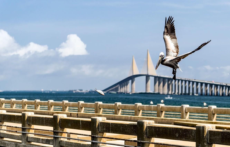 Photo wallpaper water, bridge, blue, bird, boat, fish, cloud, FL, Bay, USA, USA, Bridge, Saint, bird, blue, …