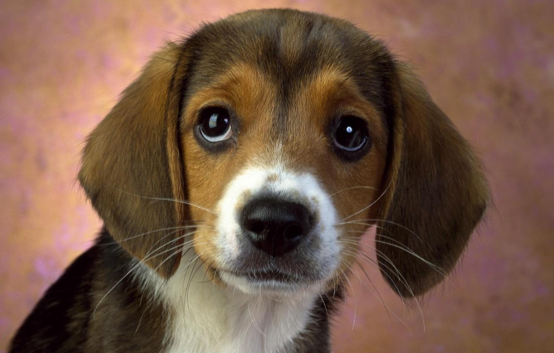 Photo wallpaper look, Wallpaper, puppy