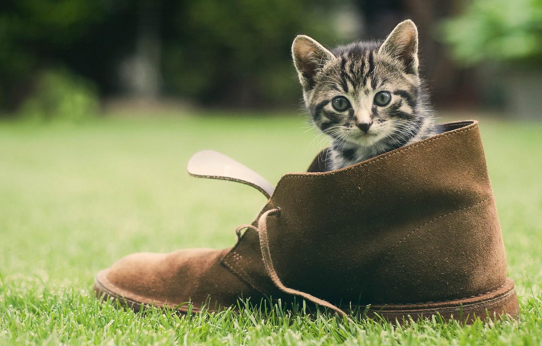 Photo wallpaper greens, grass, cat, shoes, kitty, face