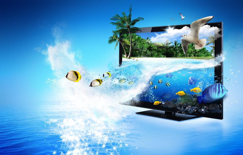 Photo wallpaper sea, fish, glare, palm trees, seagulls, monitor