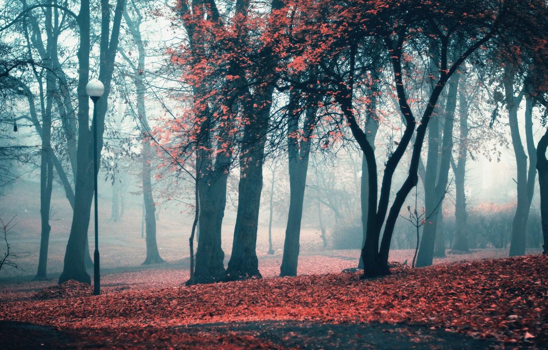 Photo wallpaper autumn, leaves, trees, Park, lantern