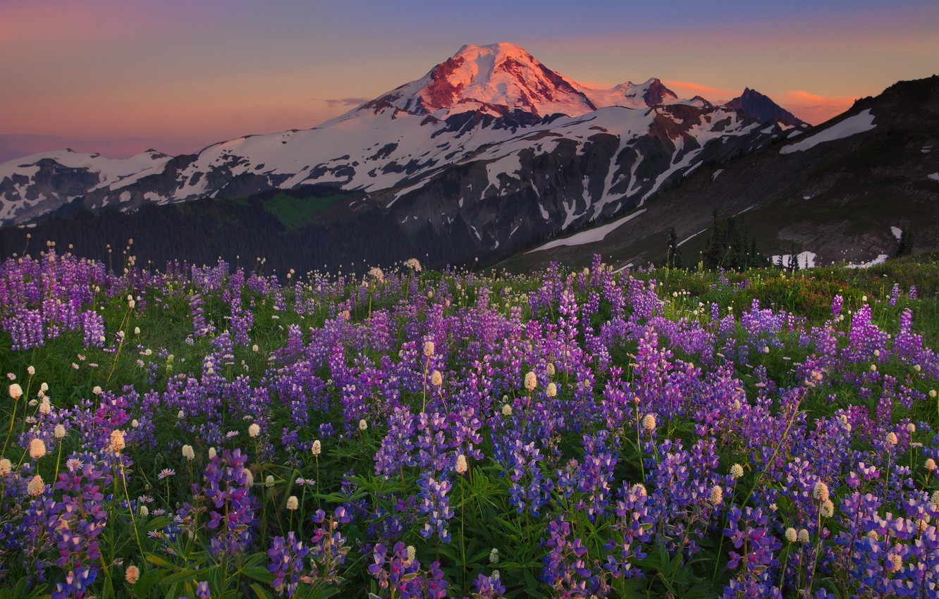 Photo wallpaper field, the sky, snow, sunset, flowers, mountains, Landscapes