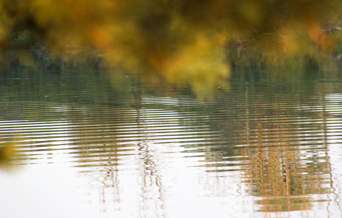 Photo wallpaper wave, autumn, leaves, water, nature, reflection, background, Wallpaper, river